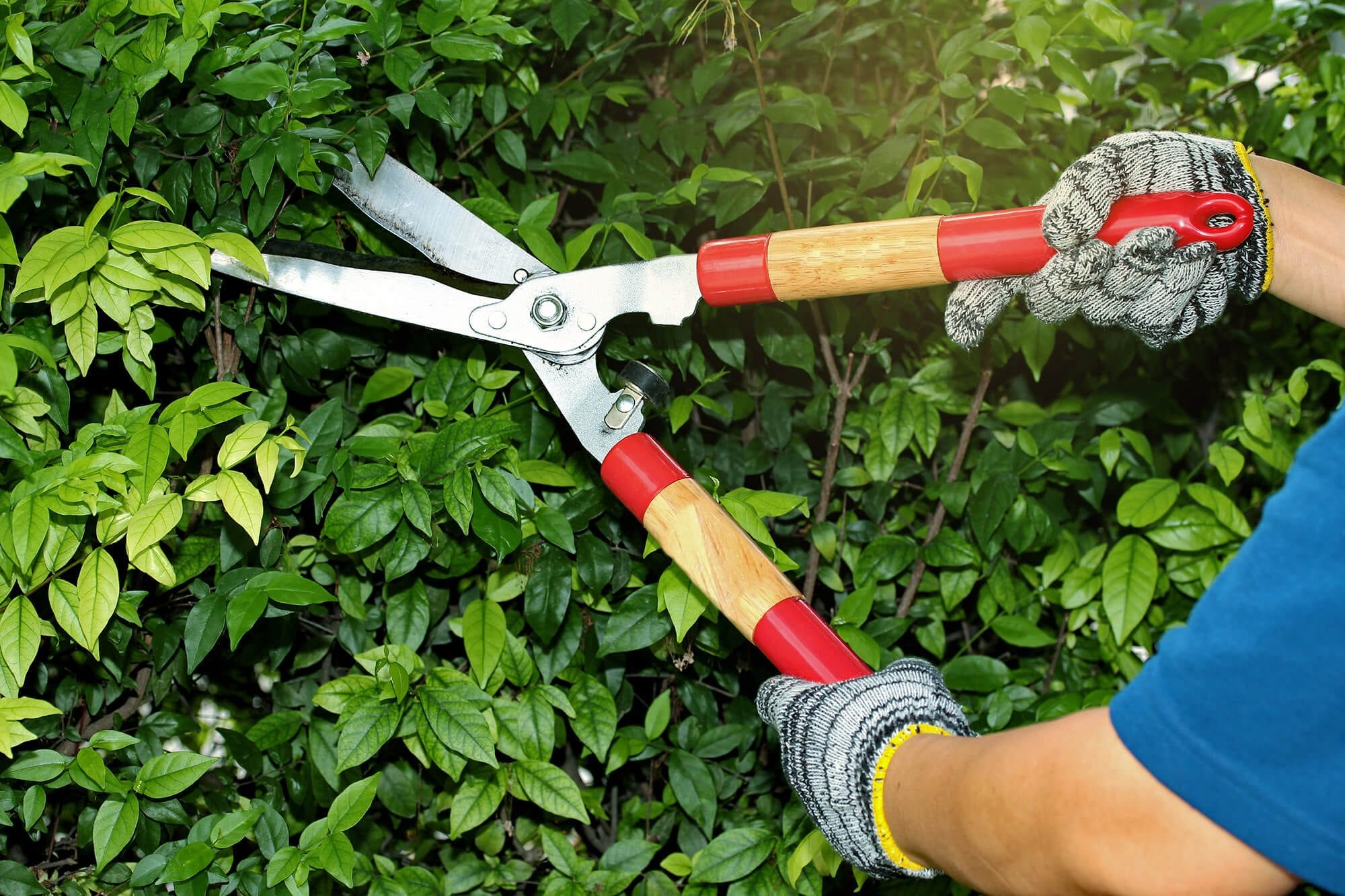 Summer Tree Safety with Arboricultural Services Treework Ltd