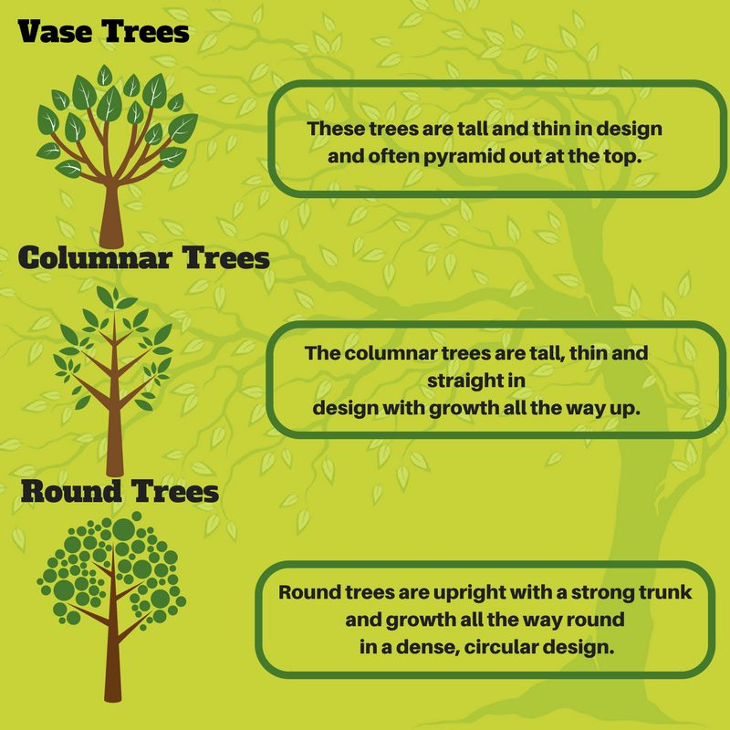 Learn About the Shape of Your Trees